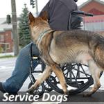 servicedogs